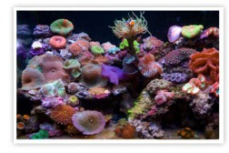 Saltwater Aquarium Maintenance for Corals and Reefs | Greenwich, Connecticut